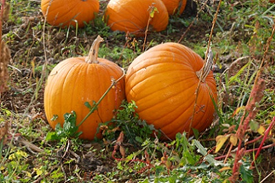 1418672_41952503_pumpkin